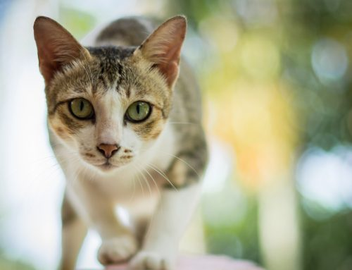 What to Expect at Your Cat's Annual Wellness Appointment