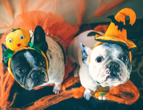 4 Safe Ways to Include Your Pet in Halloween Fun
