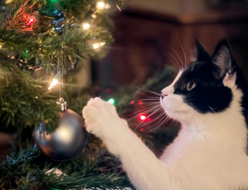 Our Top 5 Tips to Keep Pets Safe This Holiday Season