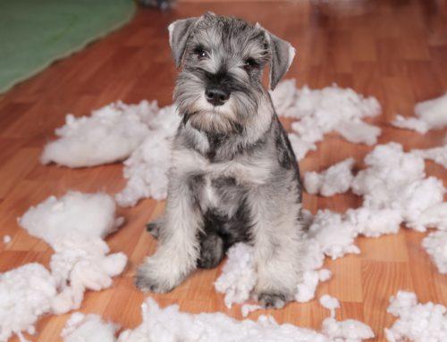 Hidden Hazards: How to Puppy-Proof Your Home