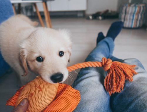 Puppy Preparedness 101