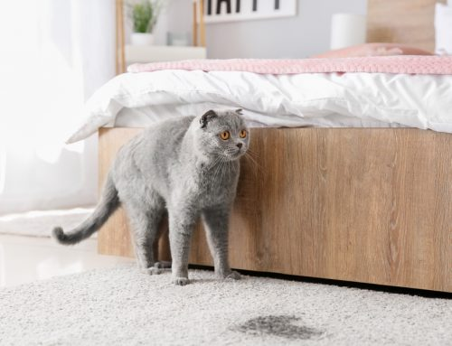 Taking Their Business Elsewhere—Cat Litter Box Problems