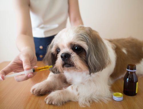 7 Expert Tips to Medicate Your Pet