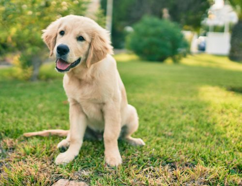 10 Reasons to Spay or Neuter Your Puppy